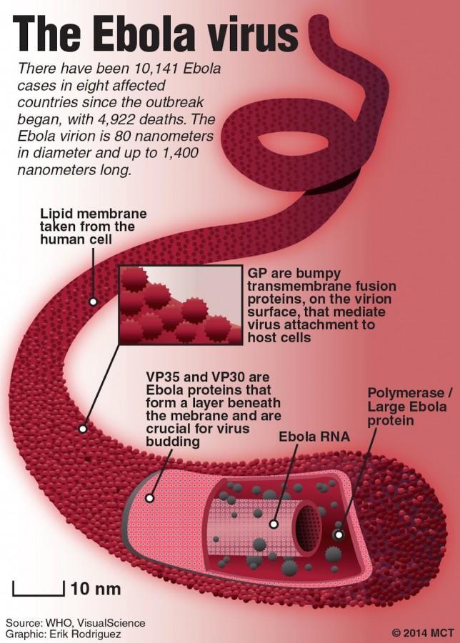 Ebola+Hysteria
