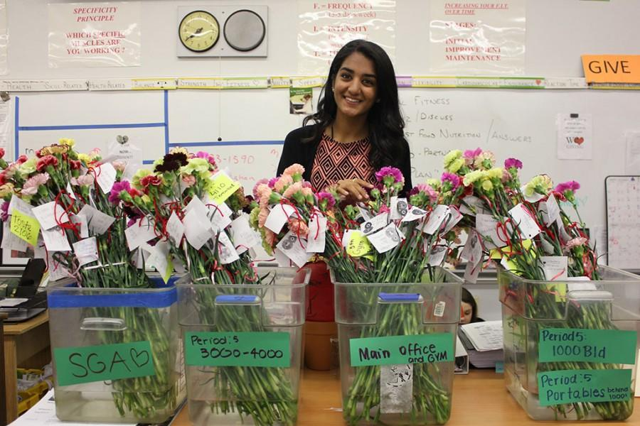 SGA member, Misha Brahmbatt, prepares the carnations to be passed out during third, fifth, and seventh period.