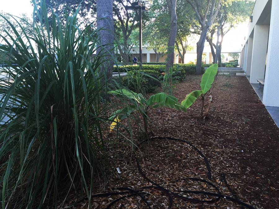New plants were added to the courtyard