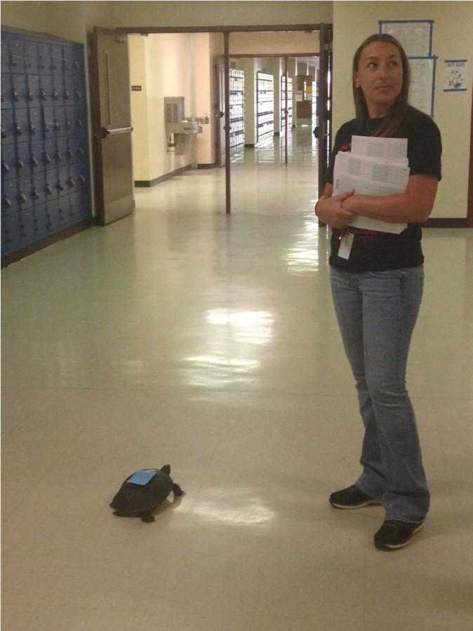 Teachers were surprised to see a turtle today after a teacher rescued it from the student parking lot. Mr. Wake will be returning it to the pond during his planning period after using it as a learning experience for his morning class. During it's stay at Santaluces, the turtle will be wearing a hall pass on its back.