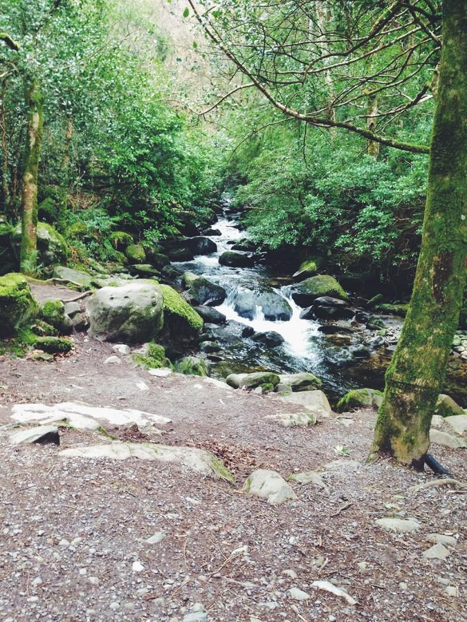 The Killarney National Park in Killarney, Ireland. So much green to appreciate in the moss covered forest.