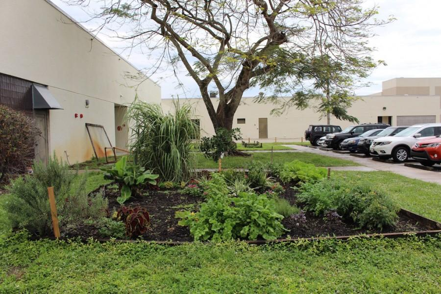 Photo of the Day: Culinary Garden Coming in Well