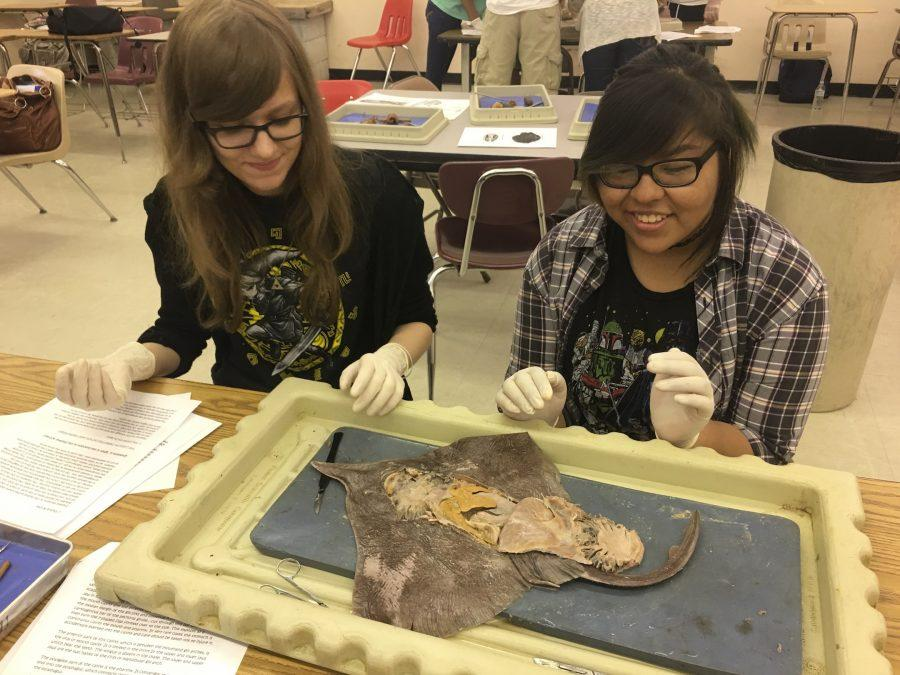 Laura+Clare+and+Isabel+Ruiz+dissecting+a+skate+in+Mrs.+Pirchio%27s+2nd+period+class.