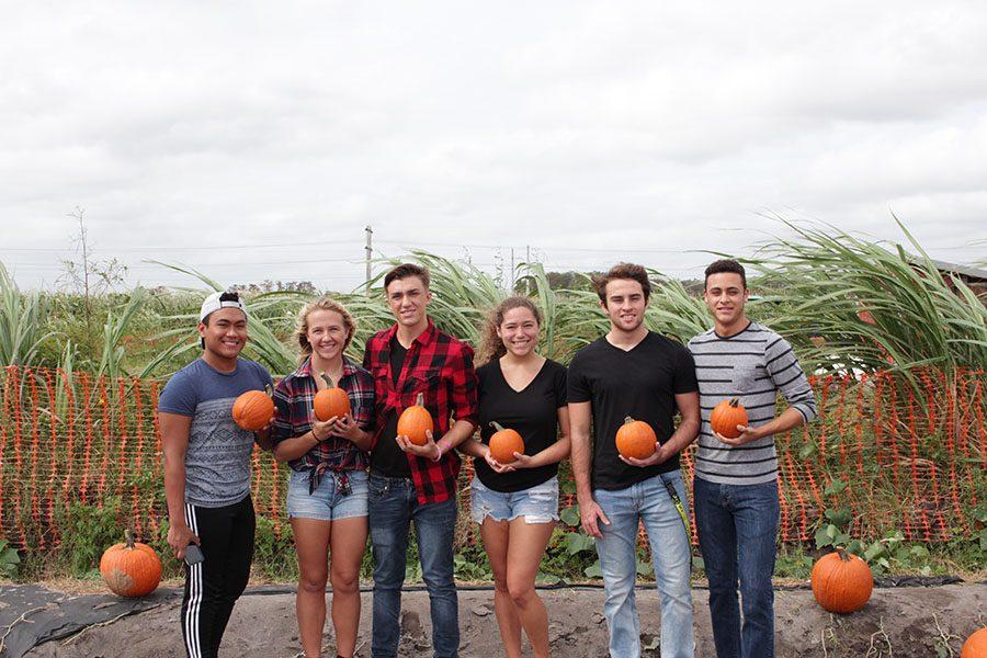 Pumpkin+Patch+Picking