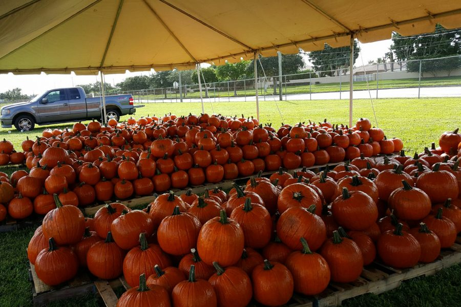 The Santaluces Marching Chiefs' Pumpkin Patch is open for business. From now until Halloween the Chiefs will be selling pumpkins at one dollar per pound. Those interested in purchasing pumpkins can visit the patch located off of Hypoluxo road near the soccer fields. For more information, visit Mr. Nikolovski in the band room.