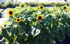 The Spot: Bedner's Farm Fresh Market