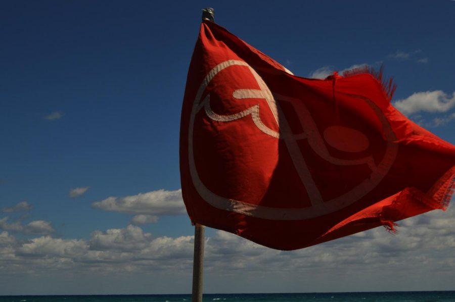 Flags go up as blacktips swim off shore.