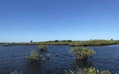 Merritt Island Refuge