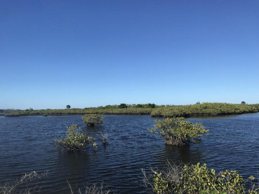 Why+You+Should+Visit+the+Merritt+Island+Refuge